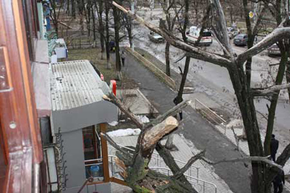 В краматорске акация рухнула прямо на балкон жилого дома.